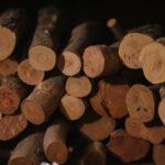 材料となるつげの木は、伊勢神宮の朝熊山に自ら採りに行く。