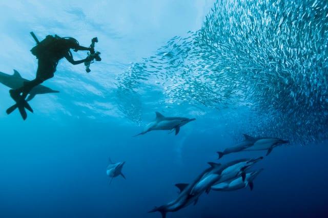 世界的に高評価のワインと新鮮な魚介類が楽しめる!南アフリカ観光局日本人スタッフに聞く「豊かな暮らし」の魅力 画像12