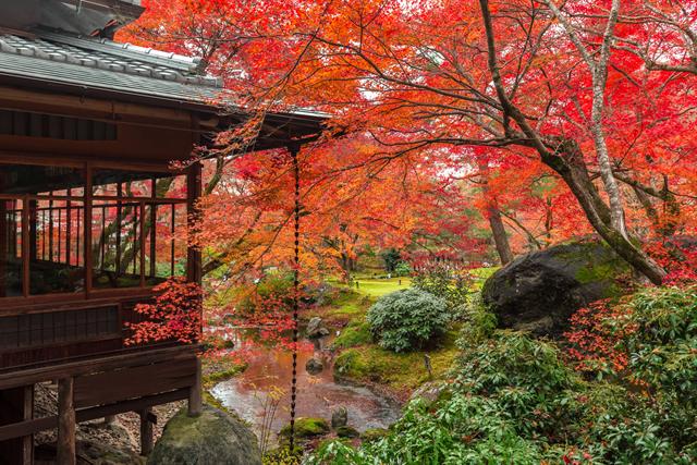 【京都ブライトンホテル】貸切で密を避け、京都の紅葉を愛でる「秋の特別早朝拝観プラン」 画像1