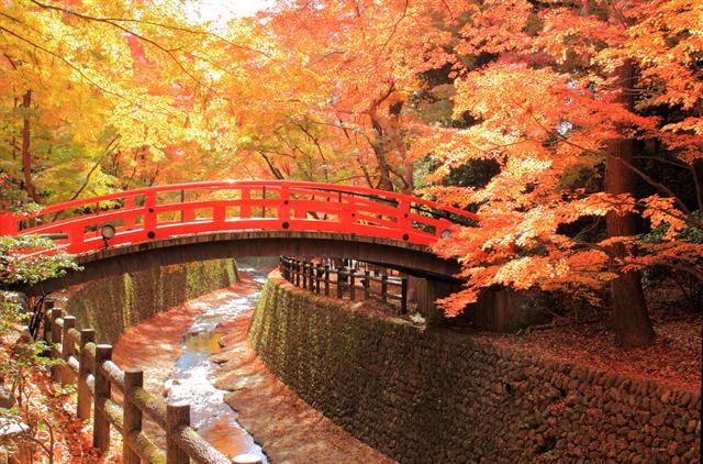 【京都ブライトンホテル】貸切で密を避け、京都の紅葉を愛でる「秋の特別早朝拝観プラン」 画像3