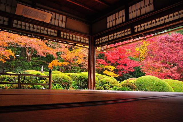 【京都ブライトンホテル】貸切で密を避け、京都の紅葉を愛でる「秋の特別早朝拝観プラン」 画像5